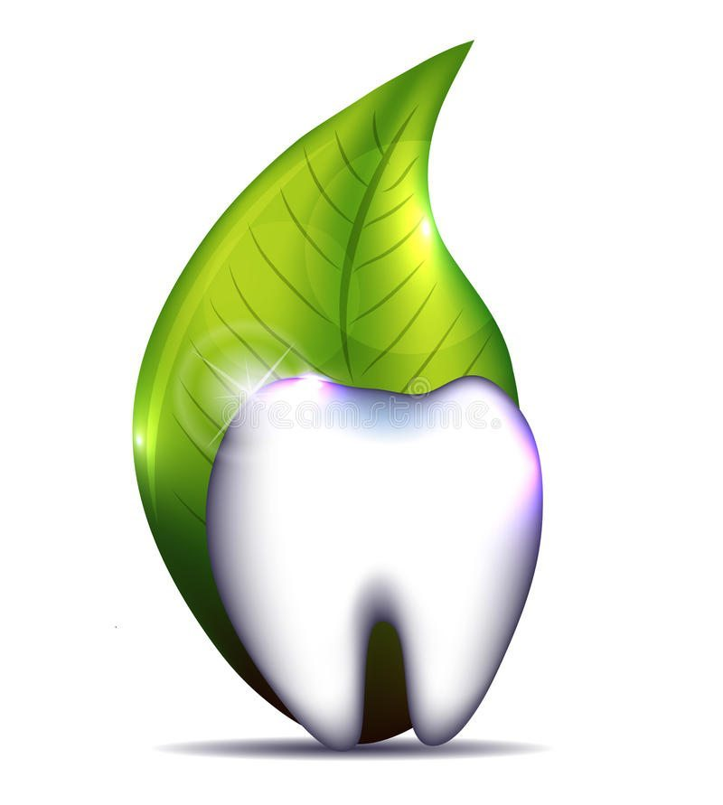 healthy-tooth-leaf-isolated-white-background-35157568